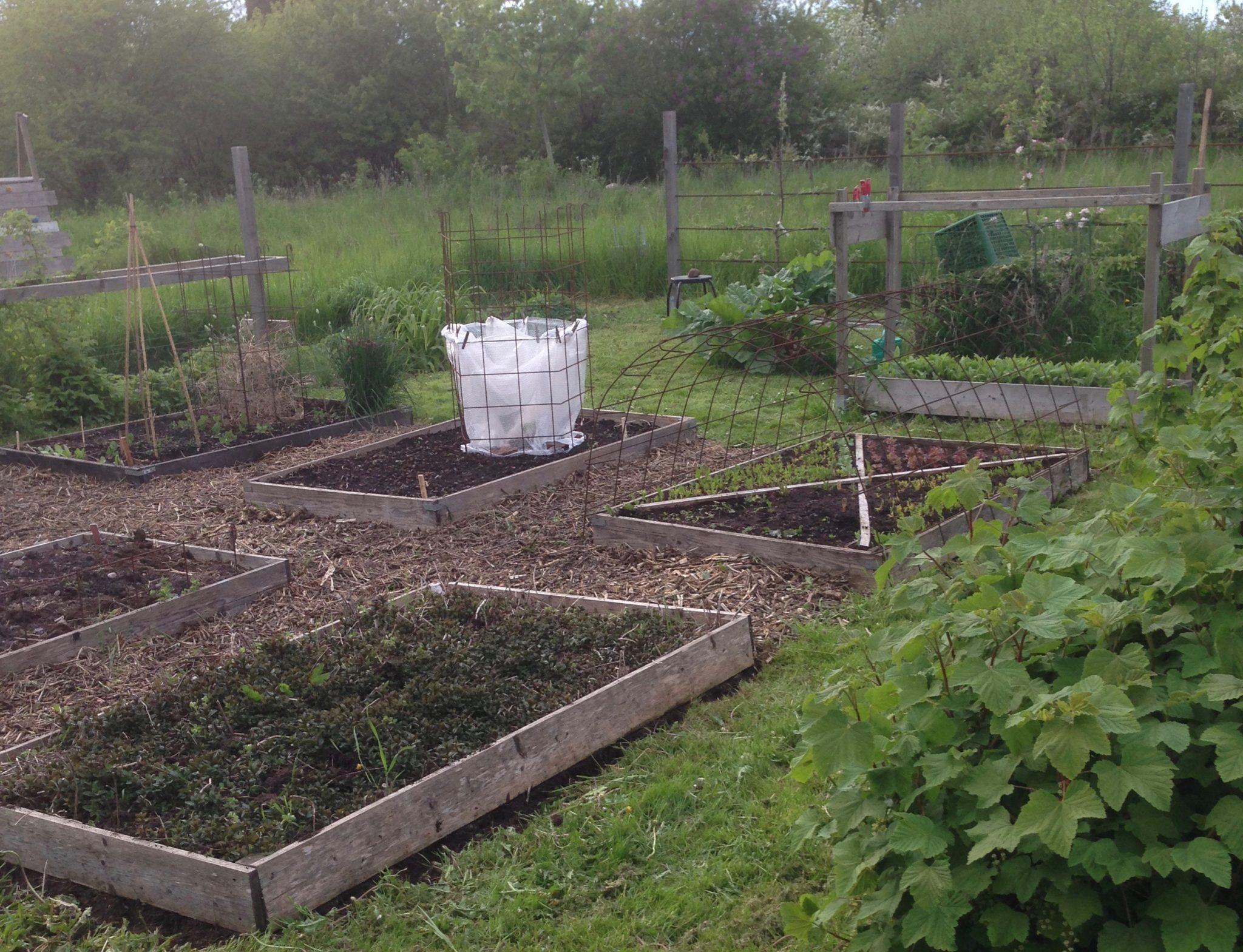 Köksträdgården tidigt på säsongen